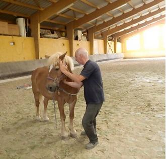 shiatsu équin